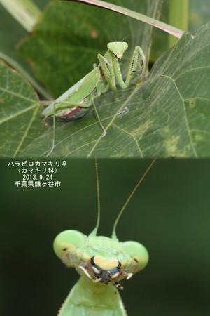Harabirokamakirimesumaeooago0685068