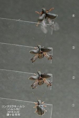 Rinngokofukihamusiueueflyingfullfly