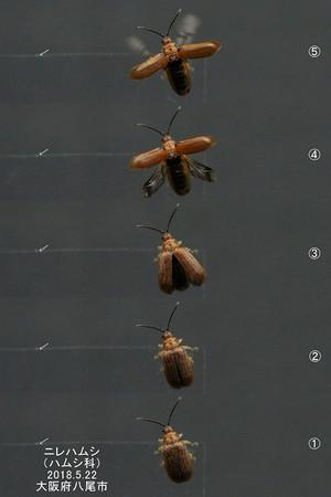 Nirehamusiueflyinghalfflyingfullfly