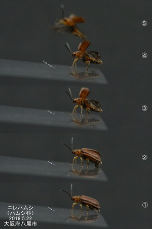Nirehamusiyokoyokoflyinghalfyokofly