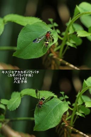 Kisuziseakakagibarabatifield2032303